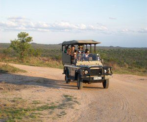 Open vehicle game drives in Kruger National Park