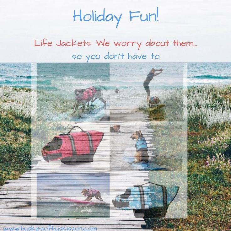Thinking of hitting the surf with your best mate these coming school holidays? Take the time to take care before the 22nd Sept and kit out your dog with one of these smart life preservers while stocks last!#dogsofinstagram #surfingdogs #surfingwithdogs #holidayingwithdogs #schoolholidays #familyholiday #huskiesofhuskisson #jervisbaynsw #huskissonnsw #southcoastnsw  Www.huskiesofhuskisson.com