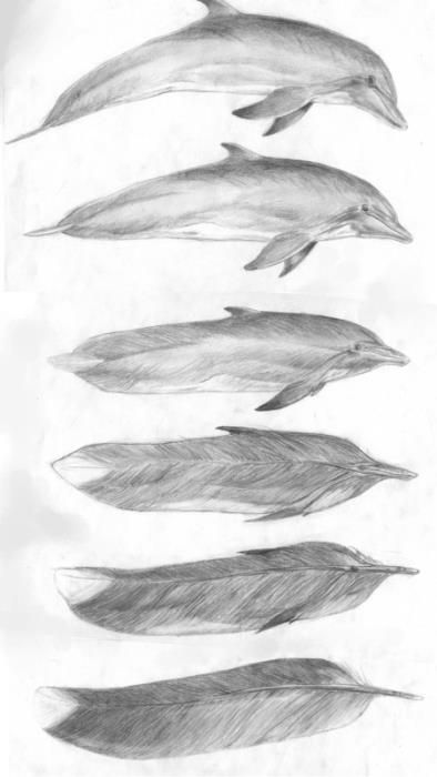 metamorphosis drawing dolphin to a feather