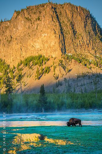 ✯ Yellowstone National Park, Wyoming. The park spans three states, stretching from Wyoming out into Idaho and Montana. The largest section of the park, however, is located within the state of Wyoming.