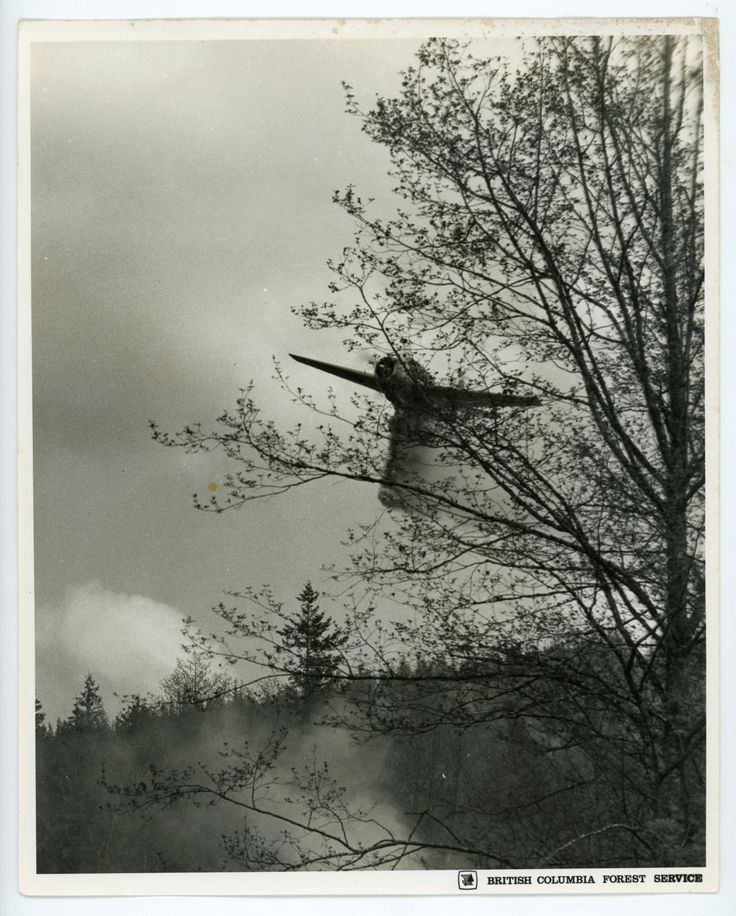 Water bomber - TBM Avenger- vintage photo-  British Columbia Forest Service Canada- original photo- aviation by GRAINSofBrussels on Etsy
