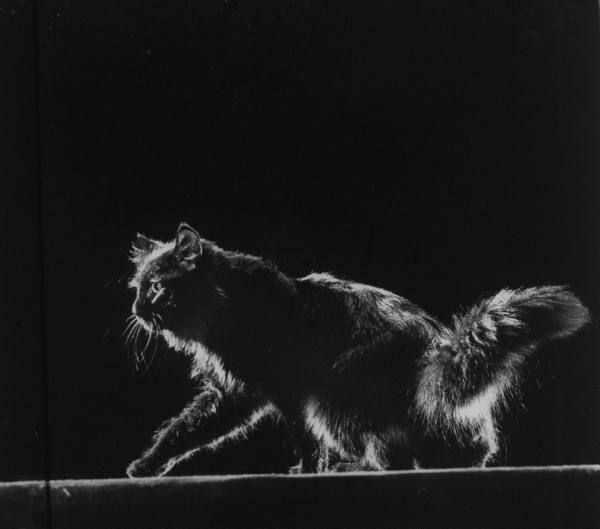 Best C A T S Images On Pinterest Cats Windows And Crazy Cat Lady - This photographer is celebrating stray cats through majestic portrait photographs