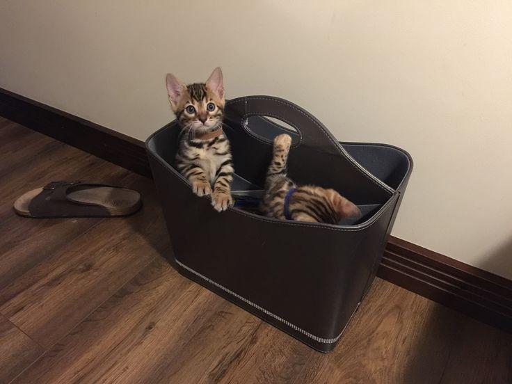 Kittens are playing around.