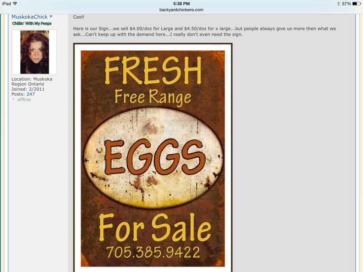 35 best Eggs for sale signs images on Pinterest Eggs, Egg and - free for sale signs for cars