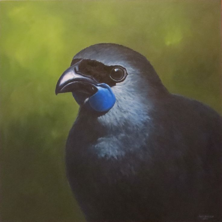 Kokako  Oil on Canvas  760x760mm