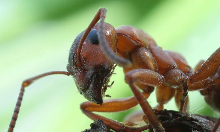 Digibordlessen mieren: http://digibordonderbouw.nl/index.php/themas/dieren/mieren