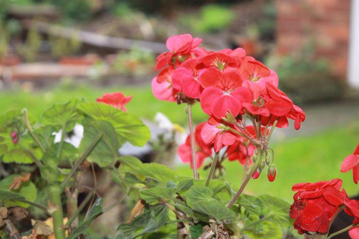 In My Garden. Taken With Canon EOS 1100D.