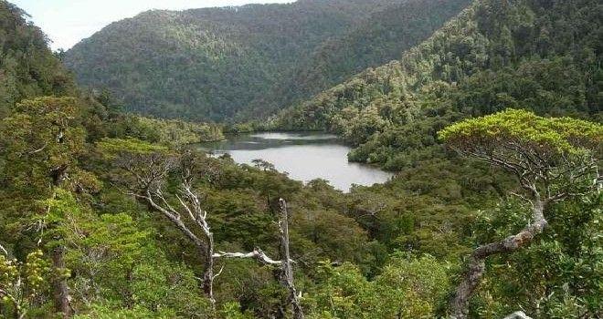 bosque nativo-chile