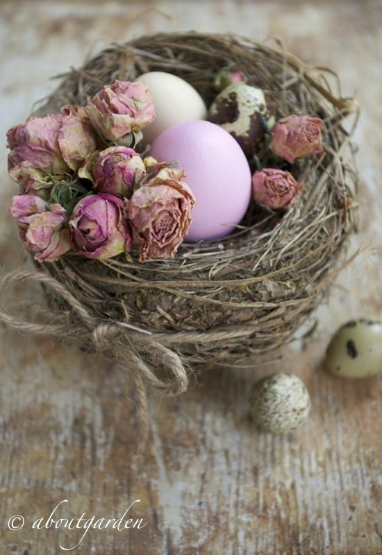 bird nest with dried roses and eggs