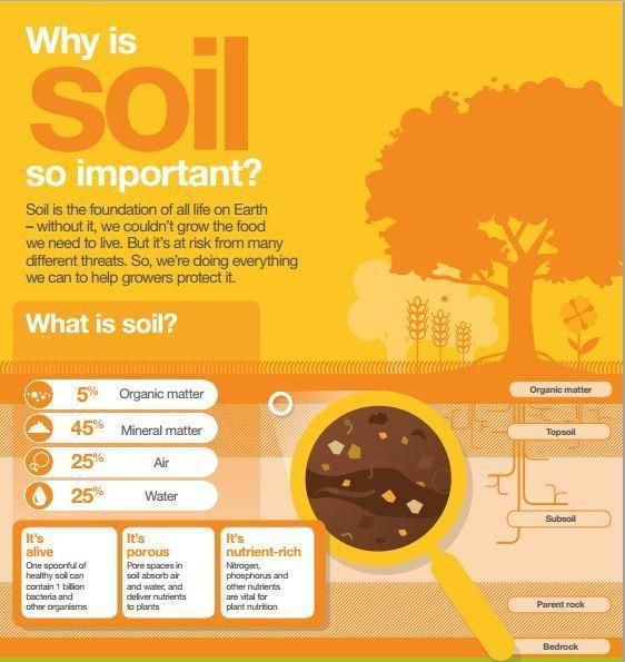 1000 images about ideias para ci ncias on pinterest for Importance of soil for kids