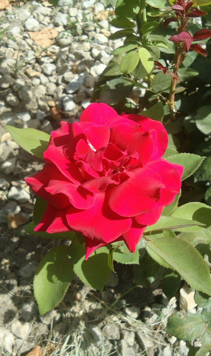 Beautiful Flowers Dore