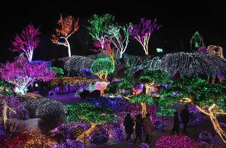 Festive holiday lights