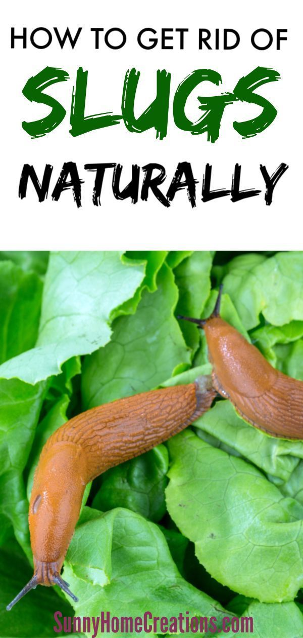 How To Get Rid Of Slugs In Your Garden Naturally