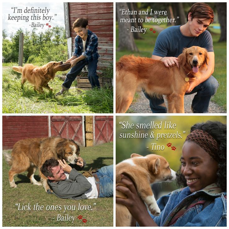 A Dog's Purpose: Homemade Dog Treats Plus a Blu-ray + DVD Giveaway | Ends 5.15.17