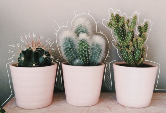 Cute Potted Plants Home Decor Ideas Plant Aesthetic Cactus Plants Cactus cacti aesthetic sticker by demi. cute potted plants home decor ideas