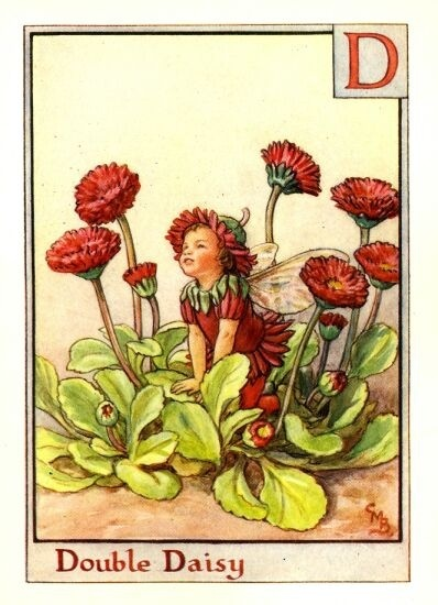 The image of the Double Daisy Flower Fairy above is one of Cicely Mary Barker's Flower Fairies. First published in A Flower Fairy Alphabet, London, Blackie, 1934.