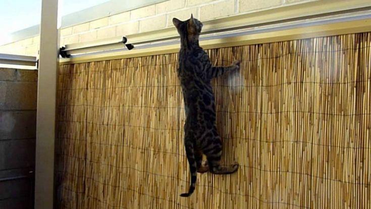 В Австралии придумали довольно забавную систему от бегства котов за заборы.