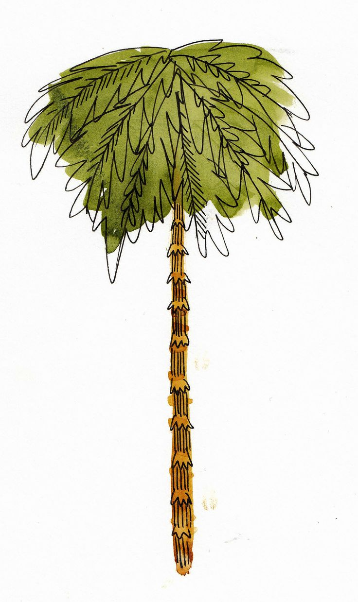 More Palm Tree!  Illustration for Nikki Beach Merchandise Watercolour/pen/ink by holly mcguirk