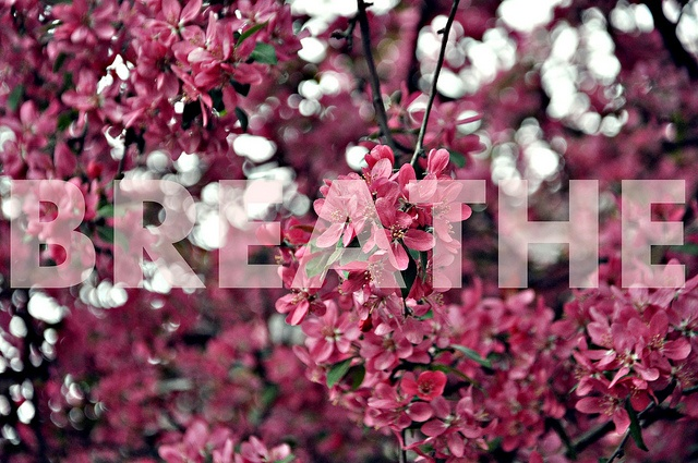 Just breatheWish List, Change Everything, Rita Bohuczki, Shops Lists, Breath Flickr, Favorite Quotes, Shopping Lists, Photos Shared