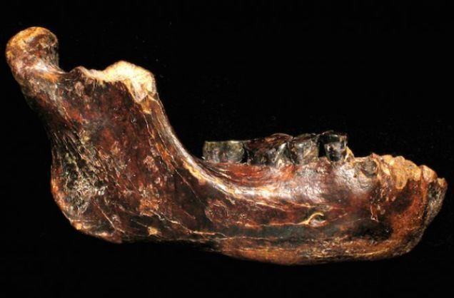 This Big-Toothed Fossil May Represent A Primitive New Human Species - Archaeology, Biology, Geology