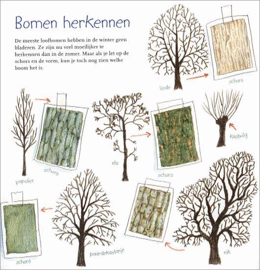 Bomen herkennen