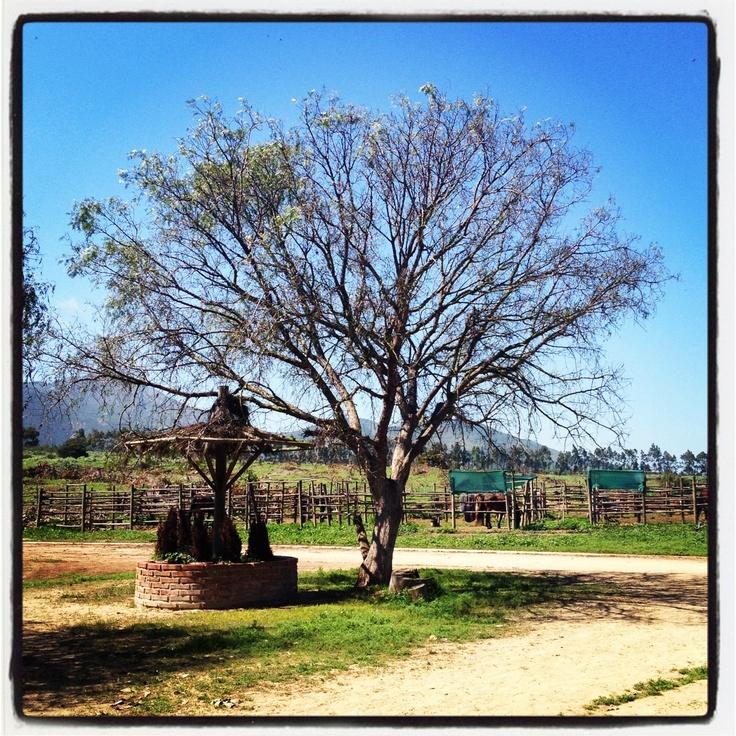 Mantagua, V región, Chile.