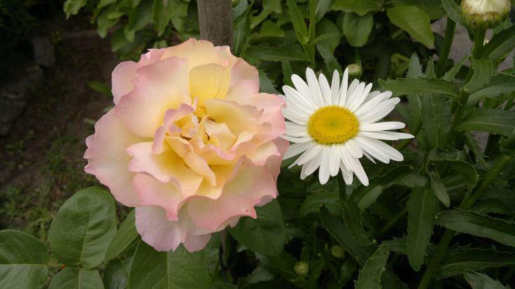 Rosa y Margarita