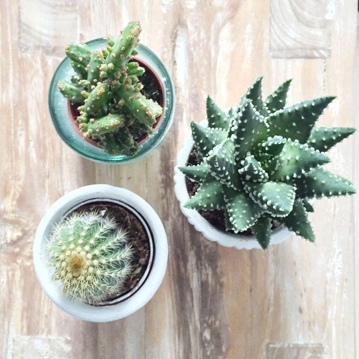 Cactus | Peet likes