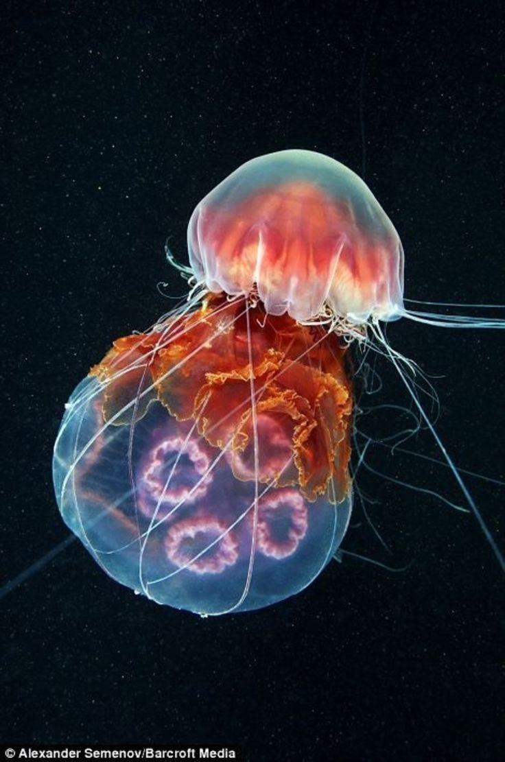 Un #aperçu photographique dans le monde de la méduse...