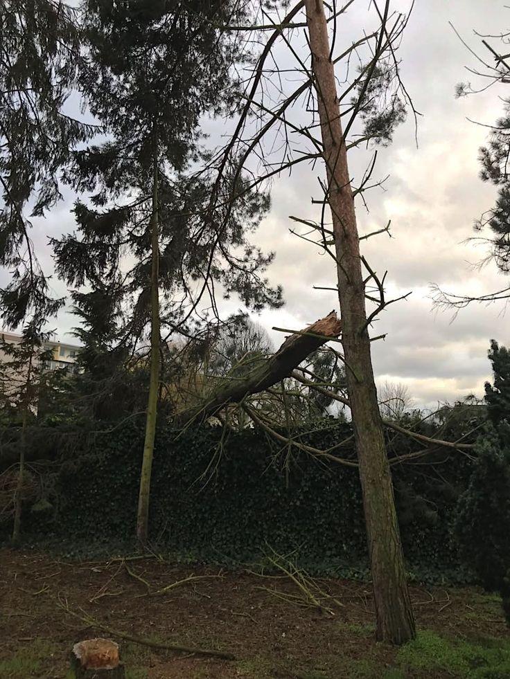Januar 2018 • Das Sturmtief #Friederike weitete sich während einer Observationsmaßnahme der Detektiv SYSTEM Detektei ® in #Hannover zu einem handfesten #Orkan aus. Als dann in #Wald und Flur #Bäume dem schweren #Sturm nicht mehr trotzen konnten, hieß es für die #Observanten die Lage zu sondieren, um Schaden von sich und der #Technik abzuwenden.
