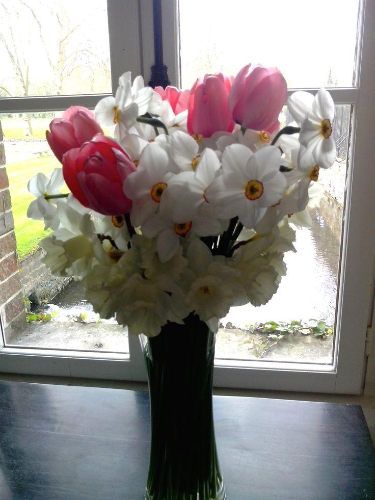 Tulipes et jonquilles
