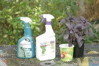 Home Remedy to Kill White Flies on Plants | eHow