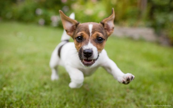 national puppy day 2016 | National Puppy Day: 15 Affordable Ways to Spoil Your Dog From a new ...