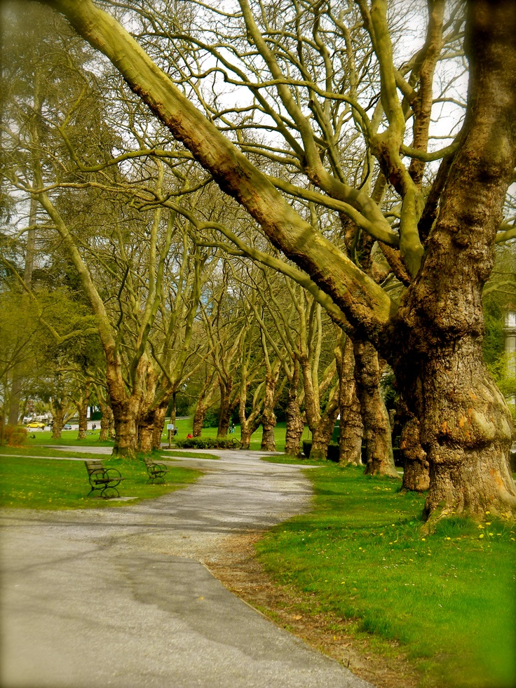 This would be a great spot for some pictures {Stanley Park, Vancouver Canada}