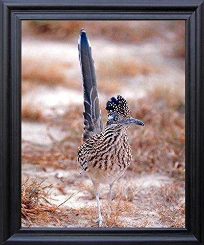Greater Roadrunner Wild Bird Animal Wall Decor Black Fram... https://www.amazon.com/dp/B0102BEATI/ref=cm_sw_r_pi_dp_x_LirqybTYDCR0A