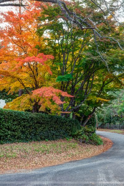 Mount Wilson in autumn is incredibly stunning and well worth visiting. #BlueMountains #NSW