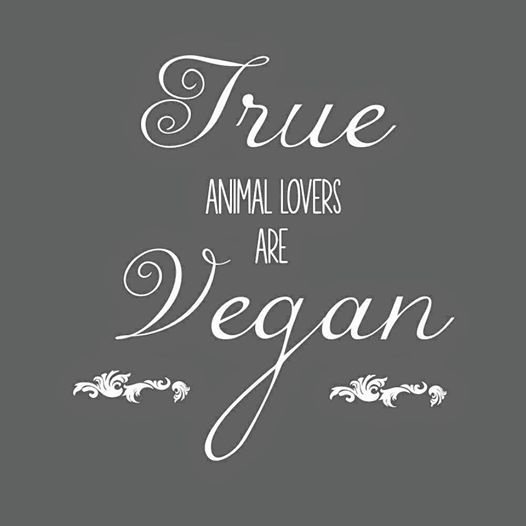 Vegan Quotes Endearing 251 Best Vegan Quotes Images On Pinterest  Animal Rights Animal
