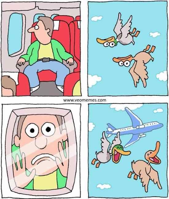 ★★★★★ Memes chistosos para facebook: Unos pájaros muy bromistas I➨ http://www.diverint.com/memes-chistosos-facebook-pajaros-bromistas/ →  #fotosdememesdivertidos #imágenesdelosmemesenespañol #memeschistososmexicanos #memesenespañol2016 #memesgraciososparacompartirenfacebook