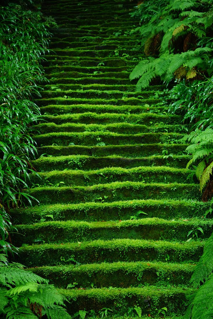 鎌倉妙法寺 Myoho-ji Temple, Kamakura, Japan  #緑 #Green #Kamakura
