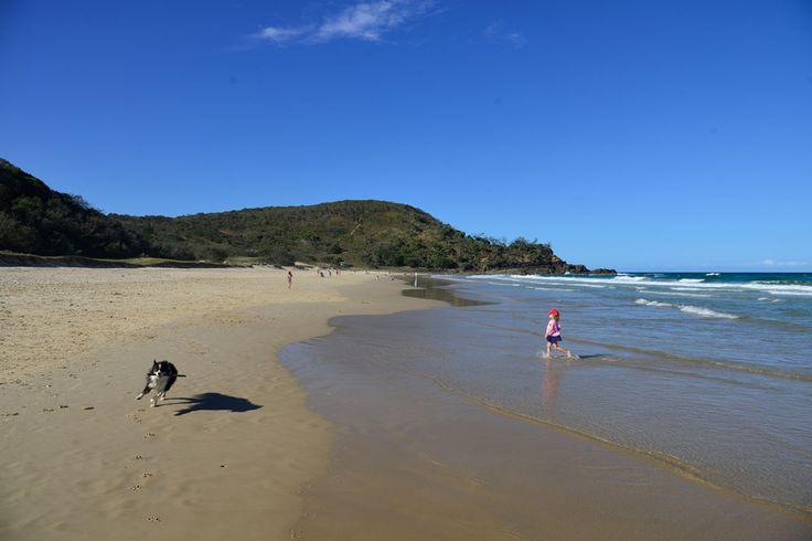 Sunshine Beach Dog Off Leash Beach
