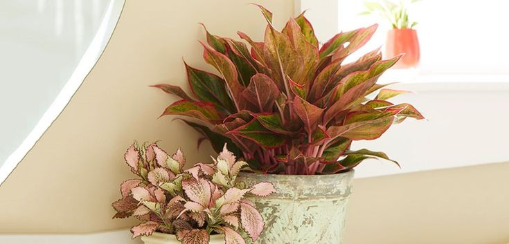 91 Best Houseplants Images On Pinterest Houseplants