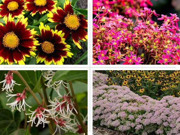 Checkout these standout new varieties of old favorites you can put in the ground and enjoy now, and for many seasons to come