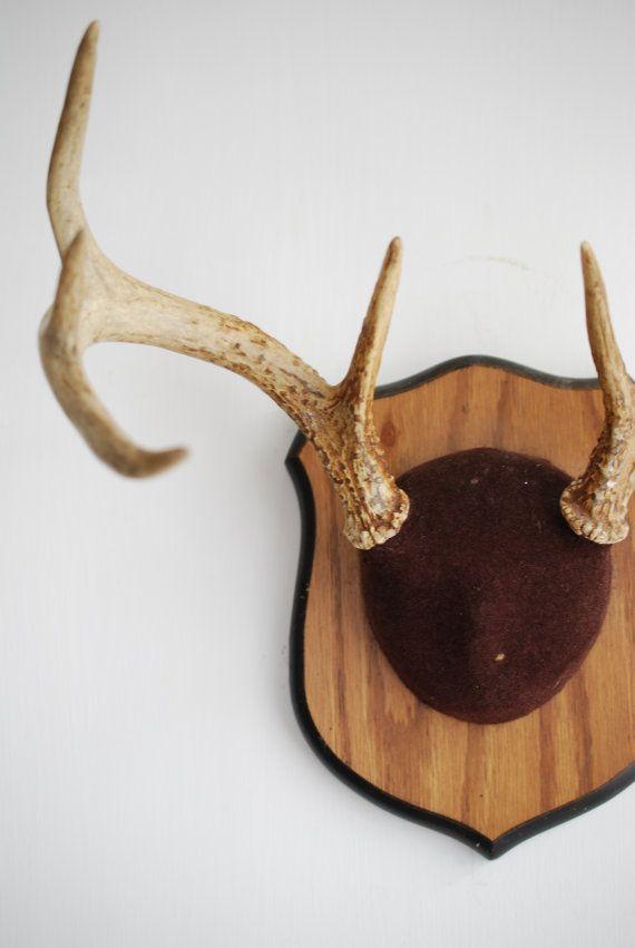 Vintage Deer Antler Mount Taxidermy Bone Brown 8 Point