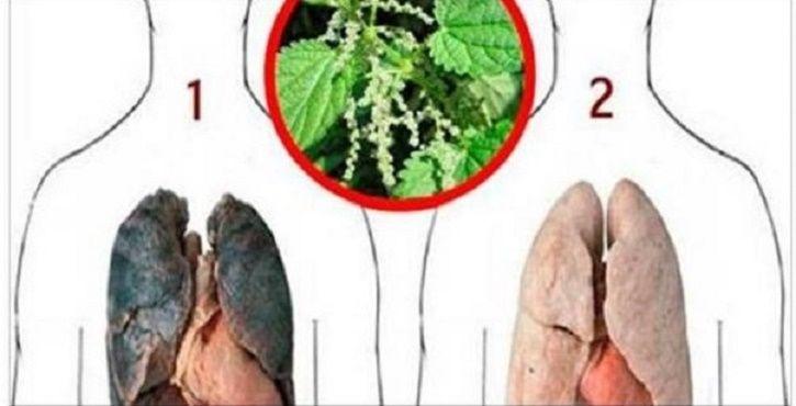 Antes considerado charmoso e símbolo de status, o cigarro hoje está em baixa.Com tantas campanhas de conscientização, a quantidade de fumantes no Brasil e no mundo vem diminuindo.Mesmo assim, ainda é alto o número de dependentes.