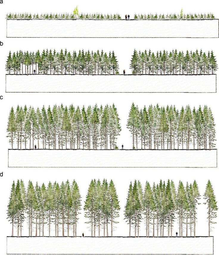 urban forestry thesis Forest islands in a sea of urban habitat by michael james olejniczak an  abstract of a thesis in biology submitted in partial fulfillment of the  requirements.