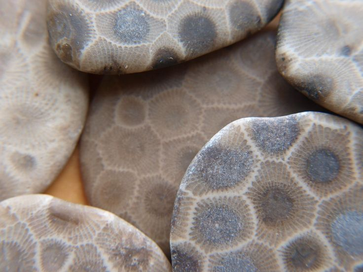 Find a Petoskey Stone. West Michigan Bucket List - West Michigan Tourist Association