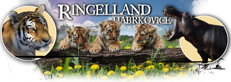 RINGELLAND Habrkovice