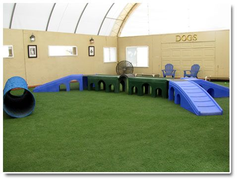 indoor dog park someday in my barn