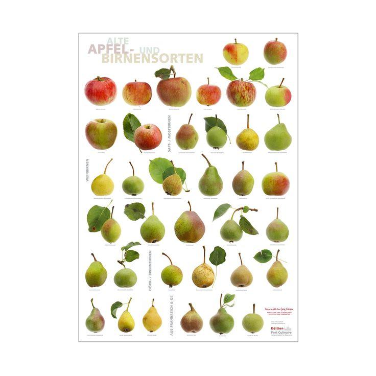 Poster Alte Apfel- und Birnensorten