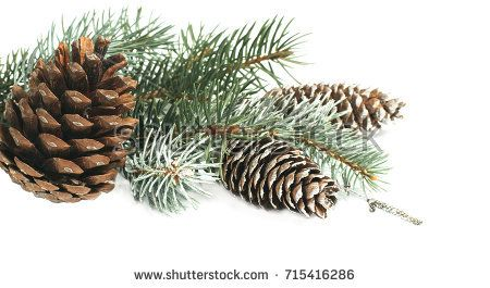 Christmas decoration with fir tree and pine cones isolated on a white background.
